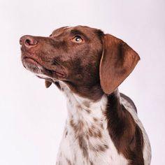 Feliz inicio de semana   #PetsWorldMagazine #RevistaDeMascotas #Panama #Mascotas #MascotasPanama #MascotasPty #PetsMagazine #MascotasAdorables #Perros #PerrosPty #PerrosPanama #Pets #PetsLovers #Dogs #DogLovers #DogOfTheDay #PicOfTheDay #Cute #SuperTiernos