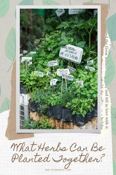 Gardening For Beginners, Gardening Tips, Grow Your Own Food, Growing Herbs, Companion Planting, Better Together, Garden Inspiration, Vegetable Garden, Organic Gardening