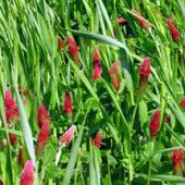 Cover Crops  Boost soil health … naturally! Planted in fall, cover crops protect soils from erosion and nutrient loss over winter. In spring, they're turned back into the soil supplying organic matter and nutrients such as nitrogen. They're the green way to nourish your garden.