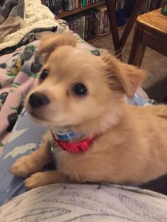 This is my new little floofer Loki #cute #dogs #dog #aww #puppy #adorable
