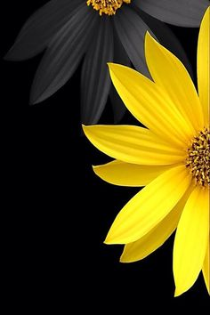 Grey and yellow flowers with black background. Grey and yellow flowers with black background. The post Grey and yellow flowers with black background. appeared first on Easy flowers. Yellow Flower Wallpaper, Black Background Wallpaper, Sunflower Wallpaper, Yellow Background, Background Images, Galaxy S3 Wallpaper, 3d Desktop Wallpaper, Wallpapers Android, Desktop Wallpapers