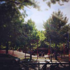 #lille #lillemaville #igerslille #arbre #tree