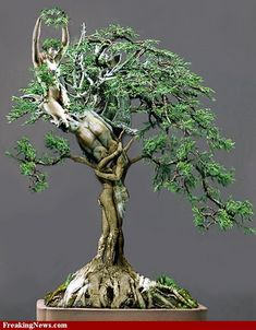 Tree of Life pictures