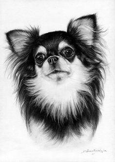Chihuahua - petdrawings