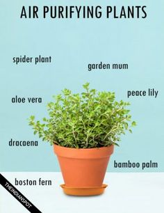BEST HOUSE PLANTS TO CLEAN AIR AND BETTER HEALTH