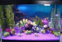 2 mickey mouse platy 3 cherry barb1 male 2 female 5 xray tetra 1 male kribensis 1 sunset thicklip gourami 5 marble hatchet fish in a 20 gallon artificial planted tank with a few live plants