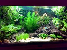 Nice design...looks very natural.  good article about Betta care too.