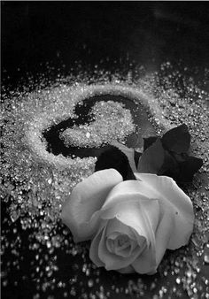 Orny y su álbum: Amar es otra cosa. Black Rose Flower, Black And White Roses, Beautiful Rose Flowers, Beautiful Flowers Wallpapers, Beautiful Nature Wallpaper, Pretty Wallpapers, Beautiful Gif, White Roses Background, Black Flowers Wallpaper