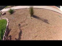We remove squirrels! - Critter Control Salt Lake City