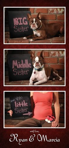 LOL cute! Pregnancy Announcement with Dogs