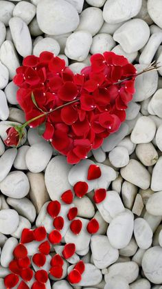 Red heart and big rose. Thank you darling Daizo💗 Red heart and big rose. Thank you darling Daizo💗 Love Heart Images, Love You Images, Heart Pictures, I Love Heart, Flower Phone Wallpaper, Heart Wallpaper, Colorful Wallpaper, Heart In Nature, Stone Wallpaper