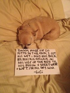 Visit Dog Shaming for more of these! Every Friday, they feature animals that are up for adoption. Enjoy!