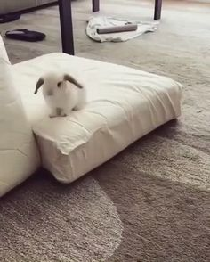 Pet Bunny Rabbits, Pet Rabbit, Bunny Bunny, Cute Bunny Pictures, Animal Pictures, Cute Little Animals, Cute Funny Animals, Cute Baby Bunnies, Cute Babies