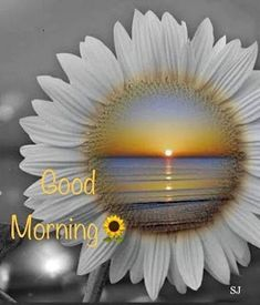 Looking for for images for good morning handsome?Browse around this website for unique good morning handsome inspiration. These funny images will make you happy. Good Morning Image Quotes, Morning Qoutes, Good Morning Beautiful Quotes, Morning Quotes Images, Good Morning Images Hd, Good Morning Picture, Good Morning Flowers, Good Morning Messages, Good Morning Greetings