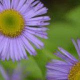 Valley Of Flowers Trek Trek Organizer-Renok Adventures Stuff To Do, Things To Do, Valley Of Flowers, Bungee Jumping, Adventure Travel, Trek, National Parks, Things To Make, Adventure Trips