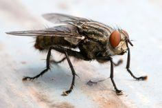 Fliege bekämpfen Vertreiben Fliegenfalle
