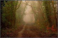Foggy forest walk.paint my photos.com