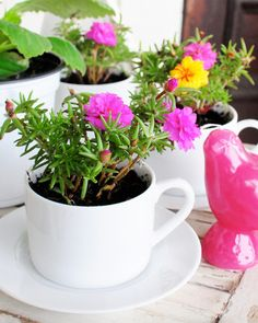 Make planters out of tea or coffee cups
