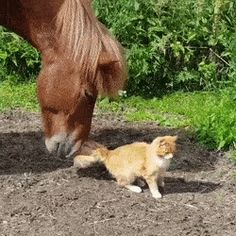 Cat and horse are the best of friends http://ift.tt/2FQ0O4H