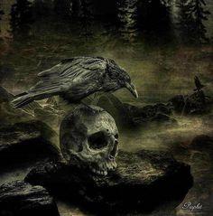 skull and raven Crow Skull, Skull Art, Vikings, Rabe Tattoo, Beautiful Dark Art, Raven Art, Animal Bones, Crows Ravens, Expressive Art