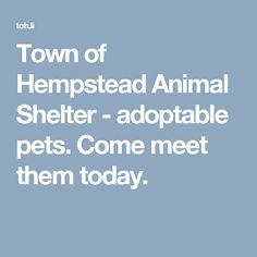 Town of Hempstead Animal Shelter - adoptable pets. Come meet them today.