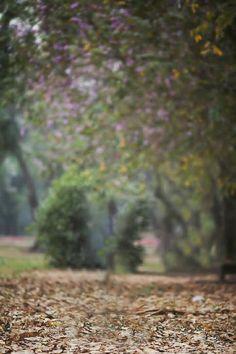 Blur Image Background, Desktop Background Pictures, Studio Background Images, Photo Background Images, Natural Background, Picsart Background, Photo Backgrounds, Blur Photography, Blur Background Photography