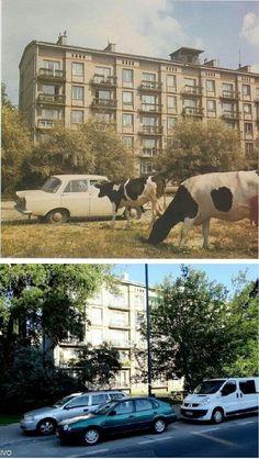 1978 i 2014 rog Wolczynskiej i Reymonta Polish, Graphics, Mansions, Retro, House Styles, Vintage, Historia, Warsaw, Vitreous Enamel