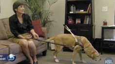 """Ann Taylor Store kicks out blind shopper & service dog [Updated]: """"...a legally blind shopper was barred from shopping at a Salt Lake City area Ann Taylor last weekend because she had a dog with her, even after she explained that she was dependent on the service animal to get around...""""Cricket is my guide dog and thanks to the Americans with Disabilities Act she is allowed to enter Ann Taylor and any other public place that we want to go"""""""" (2012)."""