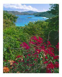 Tropical Colors of Saint John, US Virgin Islands