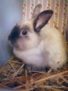 Vintage Bunny Rabbit, Bunny, Animals, Vintage, Rabbits, Cute Bunny, Animales, Animaux, Bunnies