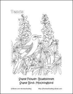 87 Best Coloring:Texas Coloring Book images in 2018