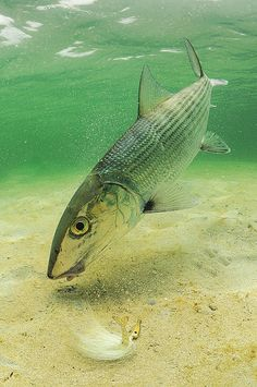 Bonefish on Lures Article SF Mag