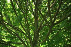 Arboretet.