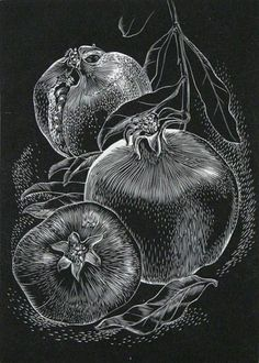Leon GILMOUR (American, 1907-1996). Pomegranates. Wood engraving. Edition 40/100. 1945. 5-1/2 x 4 inches.