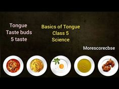 Cbse Class 5 | Basics of Tongue | Science| #morescorecbse #tongue - YouTube Tongue Taste Buds, 5 Tastes, Science Topics, Different Recipes, The Creator, Youtube, Food, Essen, Meals