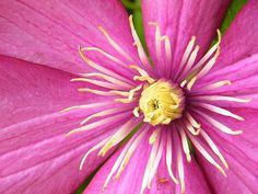 Mother Nature Has Pink Eye by Mary Sedivy