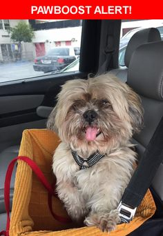 Is this your lost pet? Found in Los Angeles, CA 90023. Please spread the word so we can find the owner!    Nearest Address: Near Beswick St & Spence St