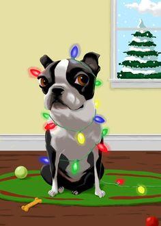 Boston terrier tangled in christmas lights - Brian Rubenacker