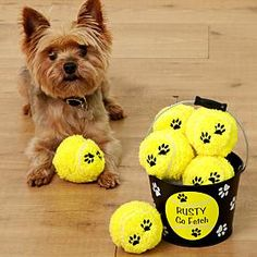 """Go Fetch Pet Bucket - A @Personal Creations Exclusive! Great exercise for both you and your pup! Paw print design metal bucket contains 6 bright yellow plush tennis balls for hours of fetching fun. We personalize the bucket with any name, up to 10 characters. """"Go Fetch"""" will always appear."""