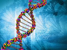 In very simple terms, telomeres are the small pieces at the ends of all DNA strands that keep them from unraveling. The telomeres. Don Du Sang, Human Genome, 8th Grade Science, Science Curriculum, Science Student, Science Education, Gene Therapy, Gene Expression, Dna Test