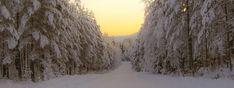 ©Liss Explore Outdoors #sunset #winter #winterwonderland #örnsköldsvik #norrland #vinter #snow #landscape #landskap #christmas #bredbyn #hiking #naturephotography #forest #snowing #vinterstemning Cross Country Skiing, Land Scape, Winter Wonderland, Outdoor, Beautiful, Outdoors, Outdoor Games, The Great Outdoors
