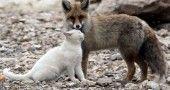 Il Gatto e la Volpe esistono davvero