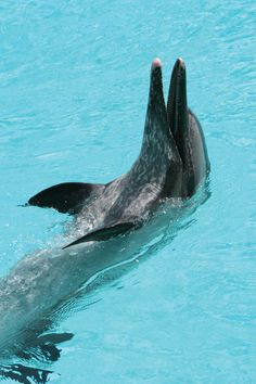 Dolphin Photo Credit: Visit Sarasota County www.thetouroperator.com