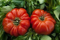Cu ce stropim rosiile pentru o cultură bio? Home Garden Plants, Home And Garden, Beefsteak Tomato, Tomato Season, Green Superfood, Summer Tomato, Douro, Tomato Plants, Growing Tomatoes