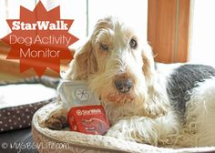 What is a StarWalk™ dog activity monitor from iQ Pet? As you know if you are a regular blog reader or social media fan, I'm a big lover of fitness. We spend a lot of time running, walking, playing, and doing sports. The StarWalk dog activity monitor is a great way for me to keep …