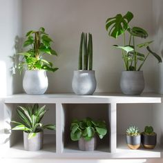 We think this corner has to be our favourite from our January photoshoot. Chinese Money Plant, Indoor Plants, House Plants, Porch, Planter Pots, Floral Design, Succulents, Display, Flowers