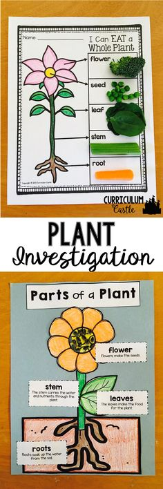 "Plant Life Cycle and Investigation: Parts of a Plant craft and ""I Can Eat a Whole Plant"" activity!"