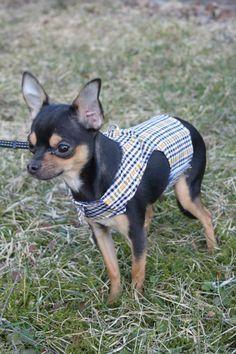 Rocky Chihuahua 8kk Harnes paita/liivi www.somemore.fi