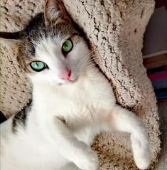 A place for really cute pictures and videos! Kittens And Puppies, Cute Cats And Kittens, Baby Cats, Cats That Dont Shed, I Love Cats, Beautiful Kittens, Pretty Cats, Cat Hug, Types Of Cats