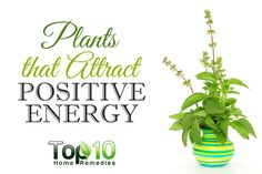 1000 ideas about artificial outdoor plants on pinterest outdoor plants window boxes and plants - Plants can improve ambience home ...